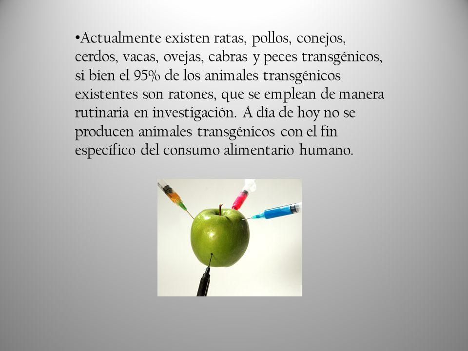 Utilización de Animales Transgénicos Los animales transgénicos se están utilizando en la actualidad para: i.Profundizar en el estudio del desarrollo y fisiología del animal.