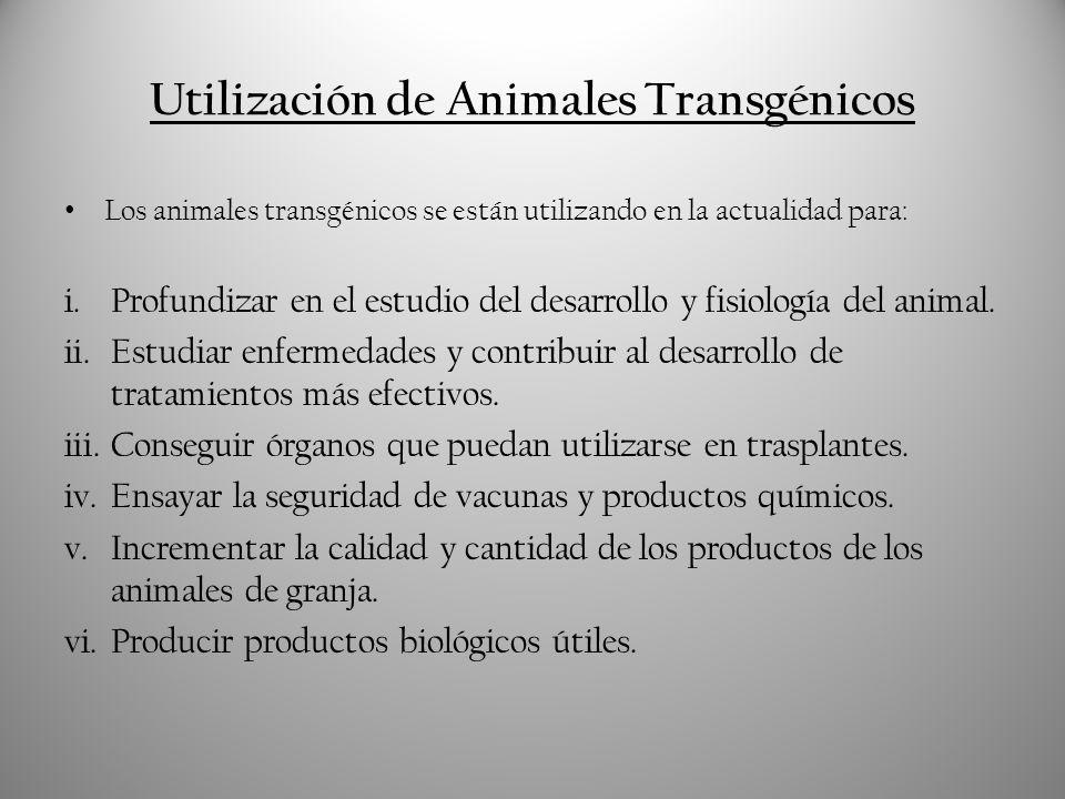 Producción de Productos Biológicos útiles: la Hormona del Crecimiento Es posible crear animales transgénicos que produzcan una serie de productos biológicos útiles, como medicinas, hormonas y proteínas, mediante la introducción de la porción de ADN que codifica dichas sustancias.