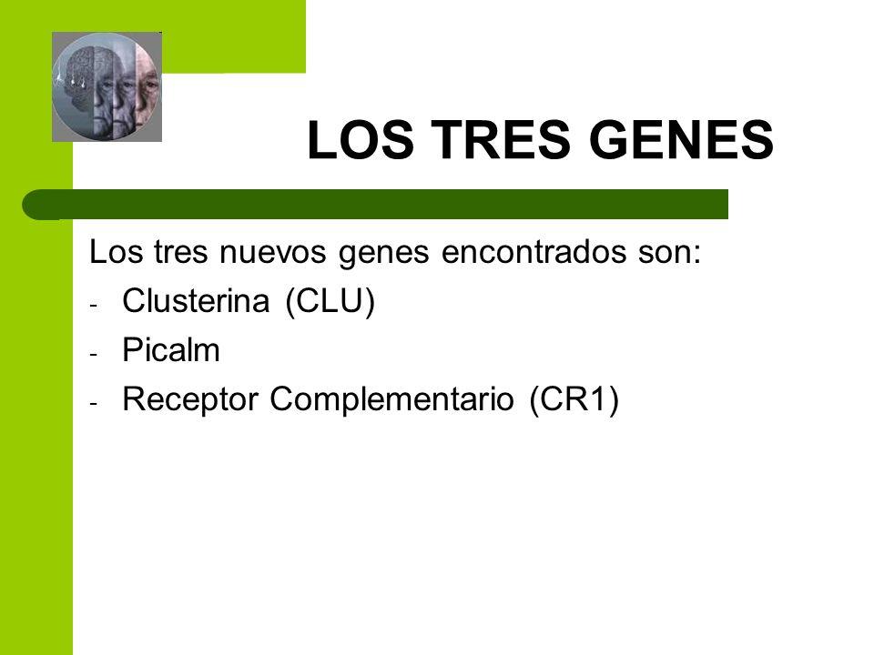 LOS TRES GENES Los tres nuevos genes encontrados son: - Clusterina (CLU) - Picalm - Receptor Complementario (CR1)
