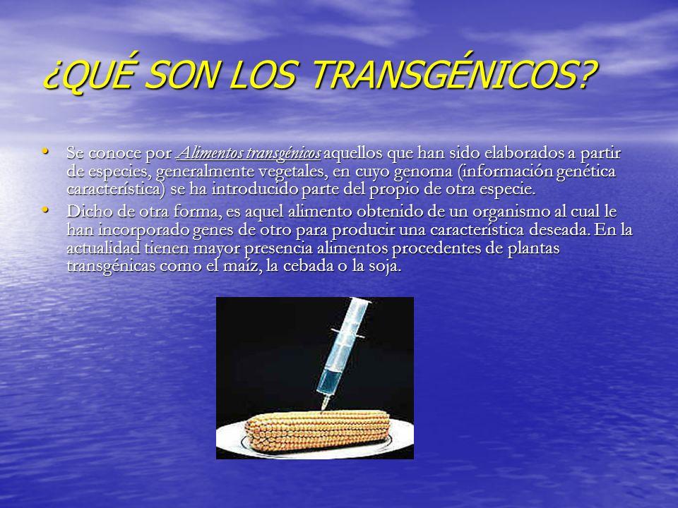 ¿QUÉ SON LOS TRANSGÉNICOS? Se conoce por Alimentos transgénicos aquellos que han sido elaborados a partir de especies, generalmente vegetales, en cuyo