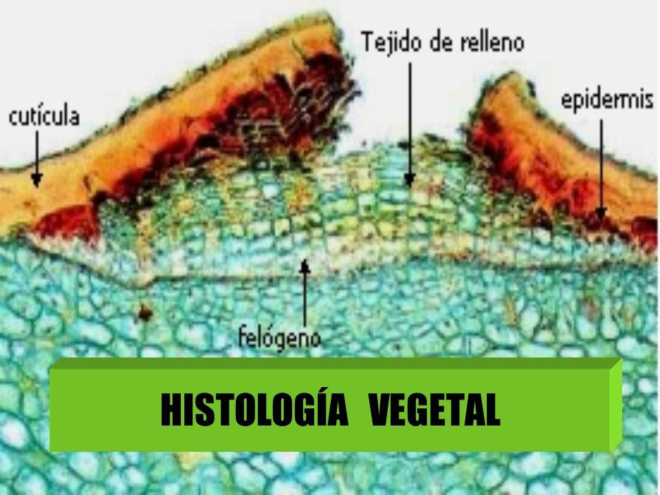 La Histología es la rama de la Biología que estudia los tejidos.