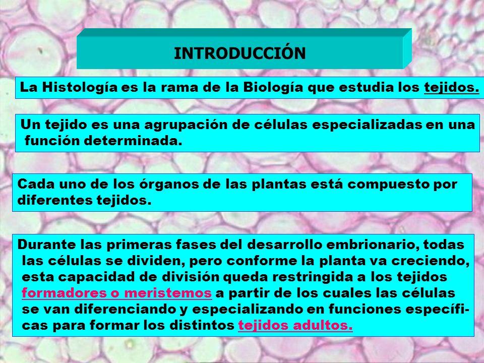 La Histología es la rama de la Biología que estudia los tejidos. INTRODUCCIÓN Un tejido es una agrupación de células especializadas en una función det