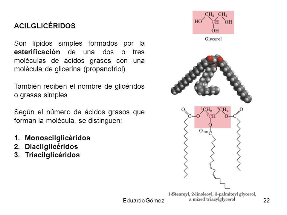 ACILGLICÉRIDOS Son lípidos simples formados por la esterificación de una dos o tres moléculas de ácidos grasos con una molécula de glicerina (propanot