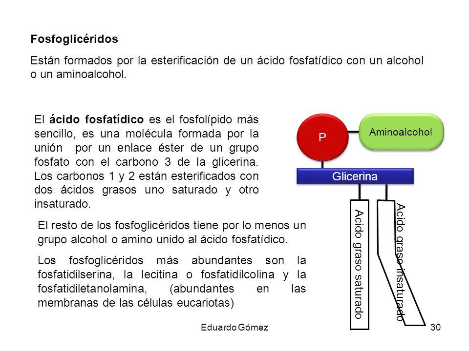 Aminoalcohol Fosfoglicéridos Están formados por la esterificación de un ácido fosfatídico con un alcohol o un aminoalcohol. El ácido fosfatídico es el