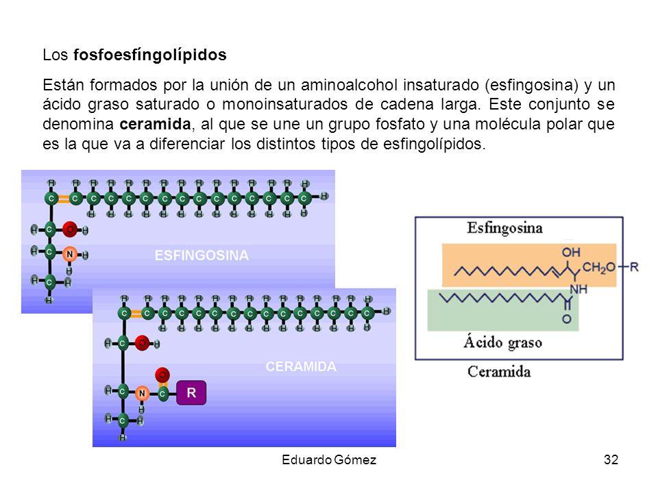 Los fosfoesfíngolípidos Están formados por la unión de un aminoalcohol insaturado (esfingosina) y un ácido graso saturado o monoinsaturados de cadena