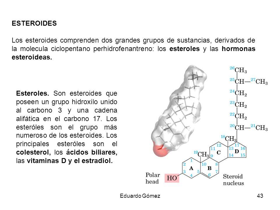 ESTEROIDES Los esteroides comprenden dos grandes grupos de sustancias, derivados de la molecula ciclopentano perhidrofenantreno: los esteroles y las h