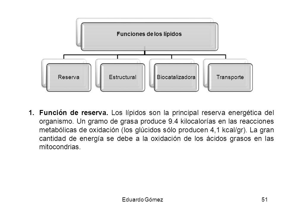 1.Función de reserva. Los lípidos son la principal reserva energética del organismo. Un gramo de grasa produce 9.4 kilocalorías en las reacciones meta