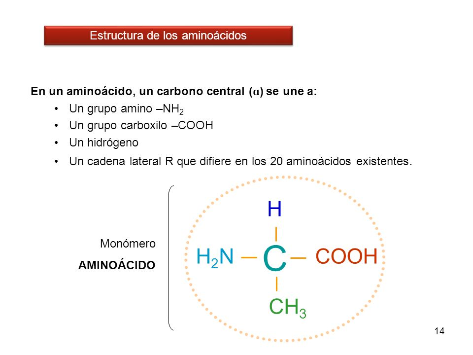 14 En un aminoácido, un carbono central ( ɑ ) se une a: Un grupo amino –NH 2 Un grupo carboxilo –COOH Un hidrógeno Un cadena lateral R que difiere en