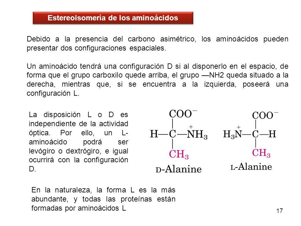 Debido a la presencia del carbono asimétrico, los aminoácidos pueden presentar dos configuraciones espaciales. Un aminoácido tendrá una configuración