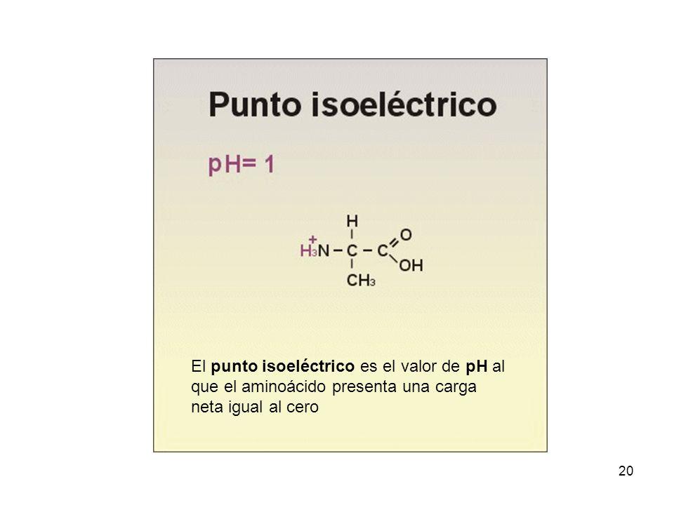 20 El punto isoeléctrico es el valor de pH al que el aminoácido presenta una carga neta igual al cero