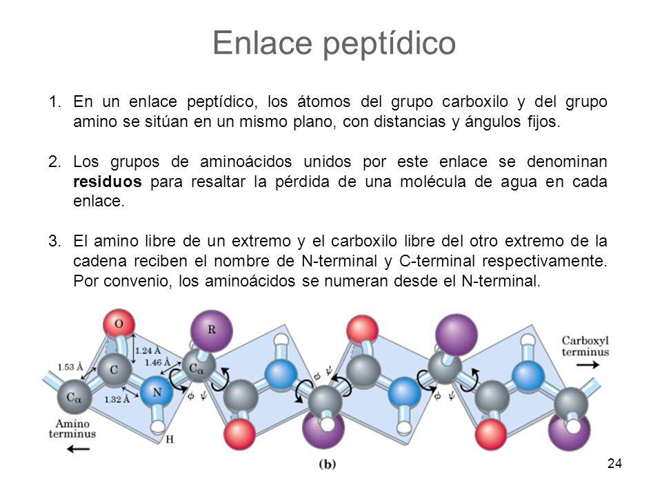 1.En un enlace peptídico, los átomos del grupo carboxilo y del grupo amino se sitúan en un mismo plano, con distancias y ángulos fijos. 2.Los grupos d