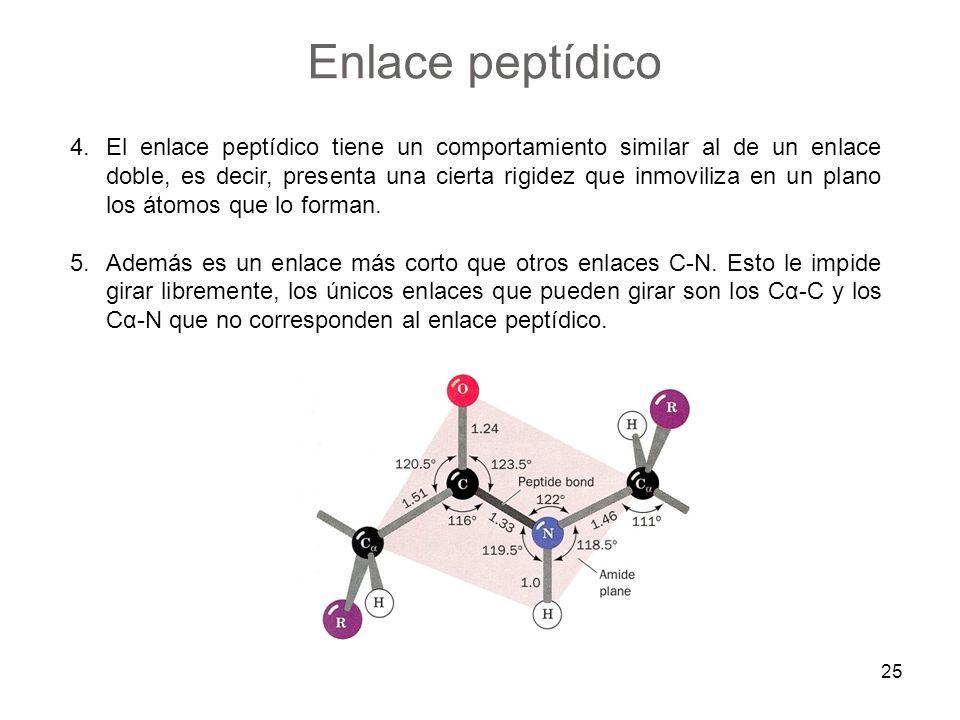 4.El enlace peptídico tiene un comportamiento similar al de un enlace doble, es decir, presenta una cierta rigidez que inmoviliza en un plano los átom