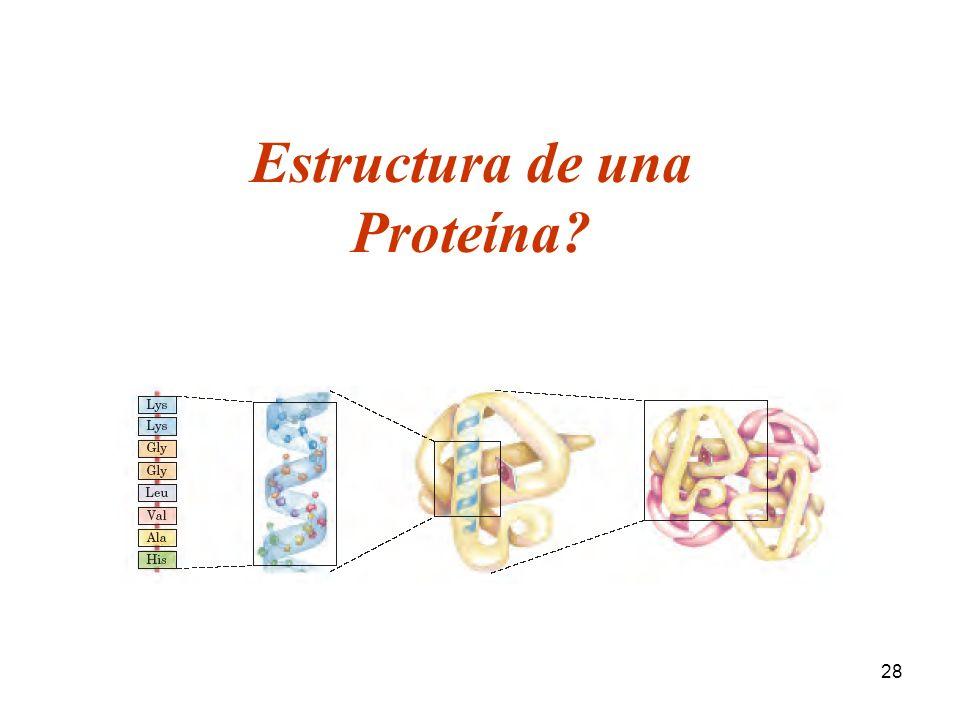 28 Estructura de una Proteína?