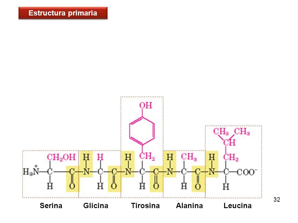 32 Serina Glicina Tirosina Alanina Leucina Estructura primaria