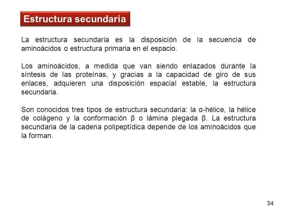 La estructura secundaria es la disposición de la secuencia de aminoácidos o estructura primaria en el espacio. Los aminoácidos, a medida que van siend