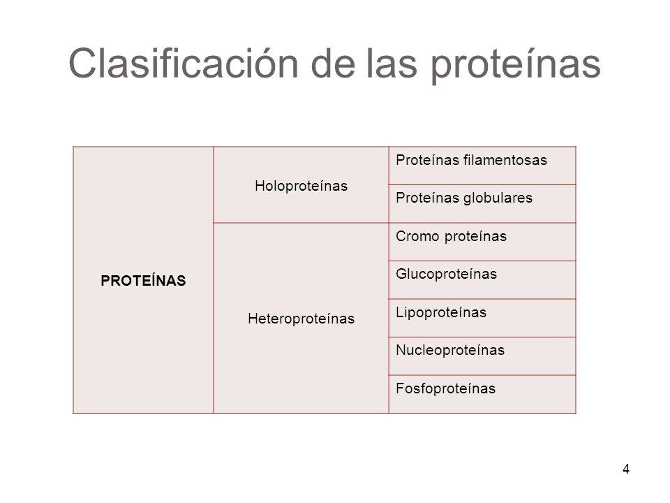 PROTEÍNAS Holoproteínas Proteínas filamentosas Proteínas globulares Heteroproteínas Cromo proteínas Glucoproteínas Lipoproteínas Nucleoproteínas Fosfo