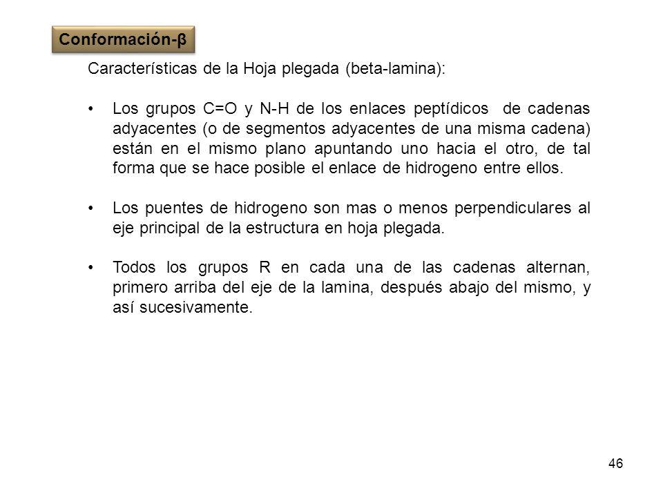 46 Características de la Hoja plegada (beta-lamina): Los grupos C=O y N-H de los enlaces peptídicos de cadenas adyacentes (o de segmentos adyacentes d