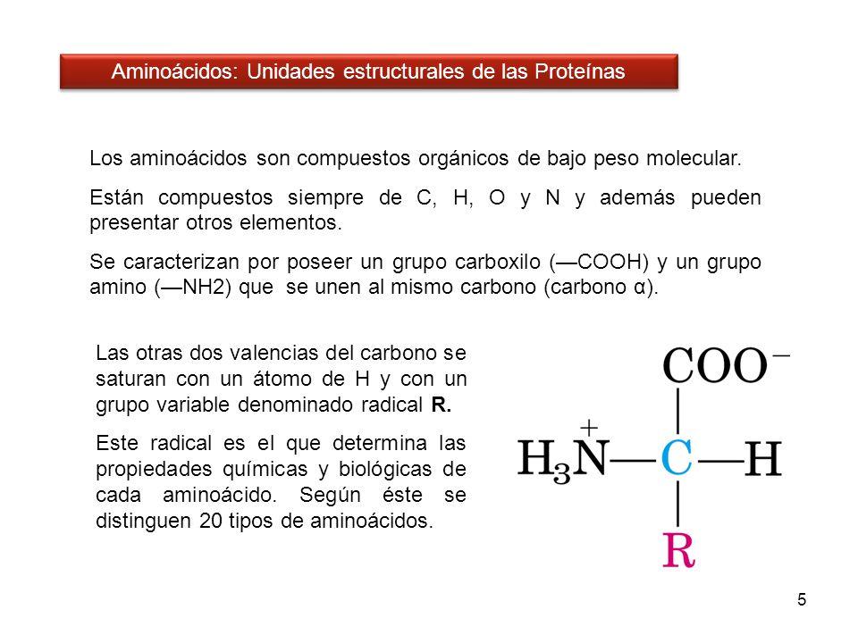 Los aminoácidos son compuestos orgánicos de bajo peso molecular. Están compuestos siempre de C, H, O y N y además pueden presentar otros elementos. Se
