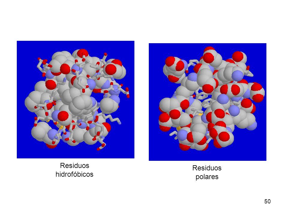 50 Residuos hidrofóbicos Residuos polares