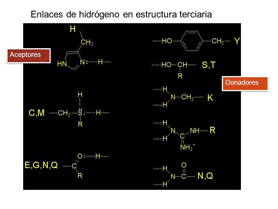 Aceptores Donadores Enlaces de hidrógeno en estructura terciaria