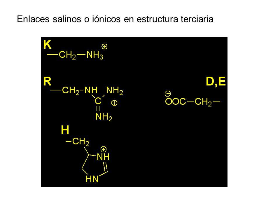 Enlaces salinos o iónicos en estructura terciaria