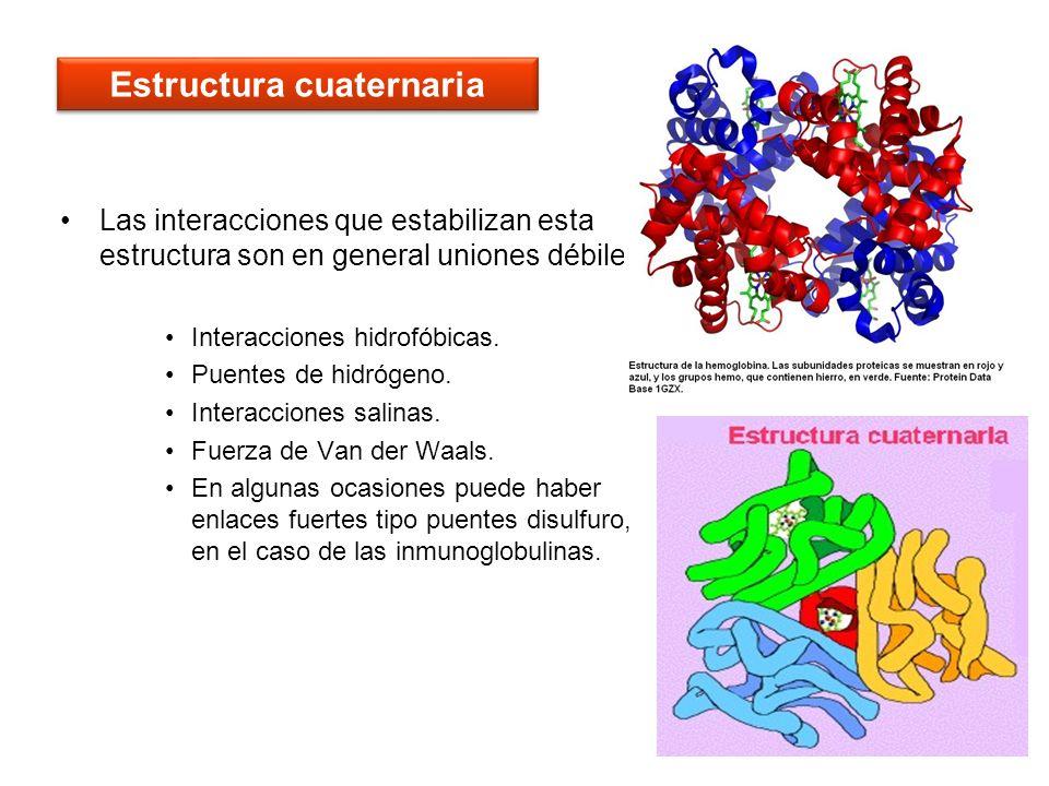59 Las interacciones que estabilizan esta estructura son en general uniones débiles: Interacciones hidrofóbicas. Puentes de hidrógeno. Interacciones s