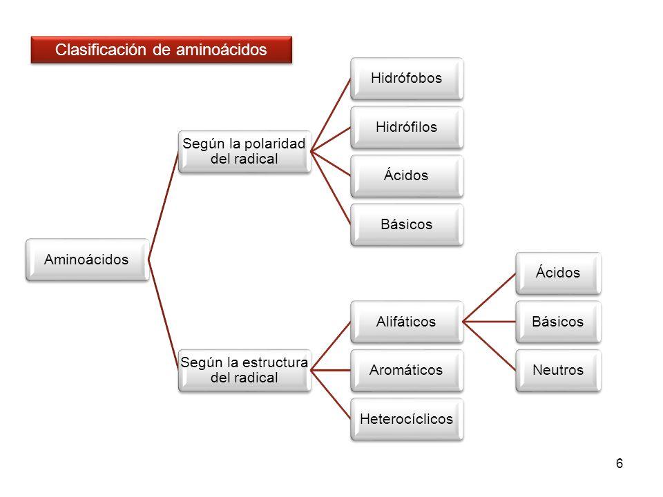6 Aminoácidos Según la polaridad del radical HidrófobosHidrófilosÁcidosBásicos Según la estructura del radical Alifáticos Ácidos Básicos NeutrosAromát