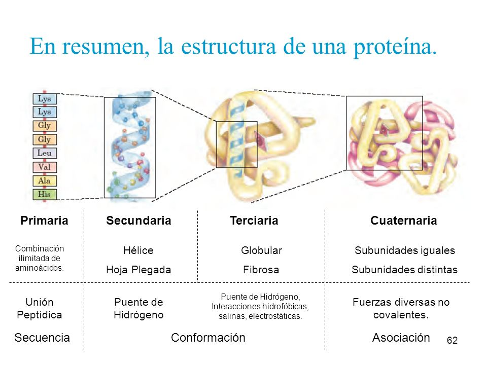 Biolófilos Proteínas