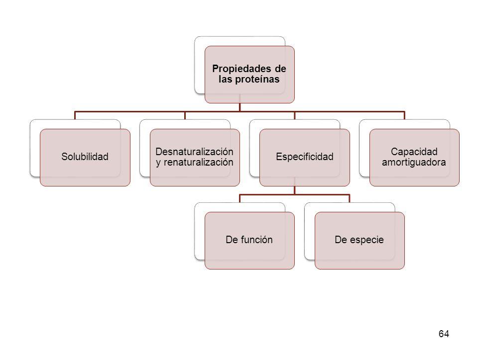 64 Propiedades de las proteínas Solubilidad Desnaturalización y renaturalización EspecificidadDe funciónDe especie Capacidad amortiguadora