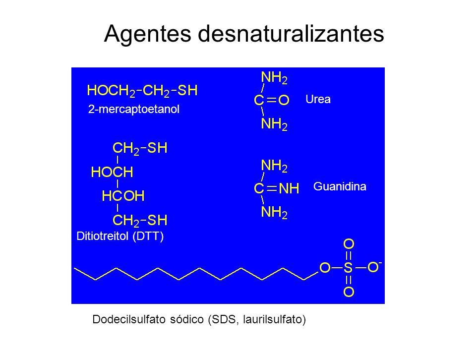 2-mercaptoetanol Ditiotreitol (DTT) Dodecilsulfato sódico (SDS, laurilsulfato) Urea Guanidina Agentes desnaturalizantes