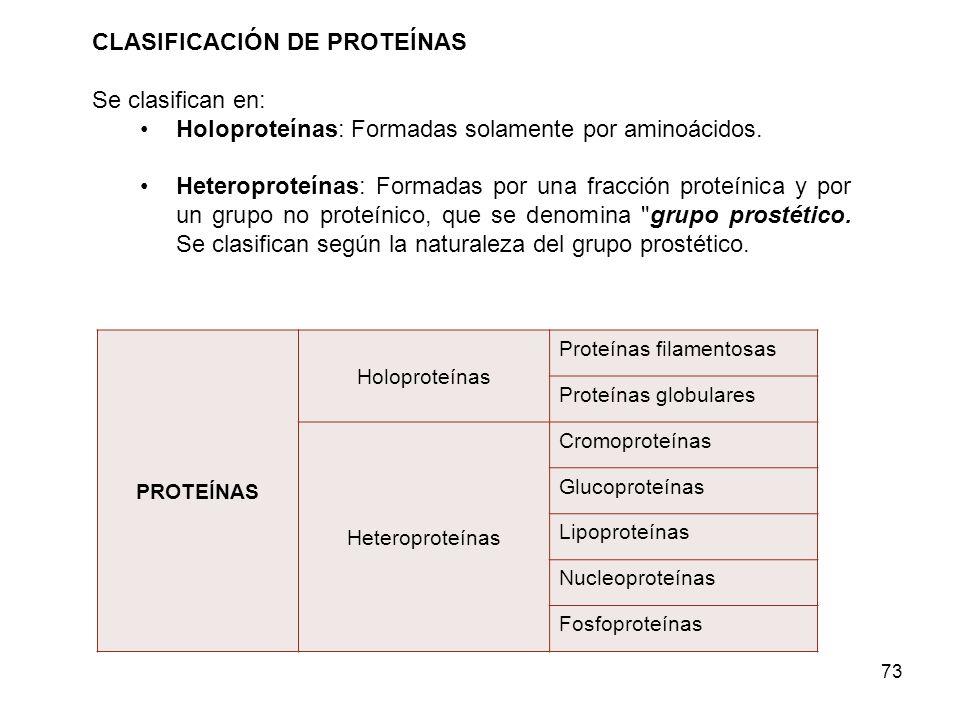 CLASIFICACIÓN DE PROTEÍNAS Se clasifican en: Holoproteínas: Formadas solamente por aminoácidos. Heteroproteínas: Formadas por una fracción proteínica