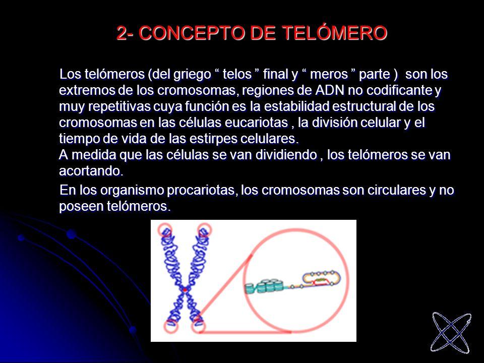 2- CONCEPTO DE TELÓMERO Los telómeros (del griego telos final y meros parte ) son los extremos de los cromosomas, regiones de ADN no codificante y muy