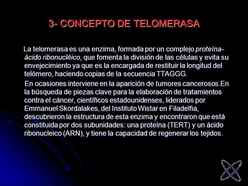 3- CONCEPTO DE TELOMERASA telomerasa es una enzima, formada por un complejo proteína- ácido ribonucléico, que fomenta la división de las células y evi