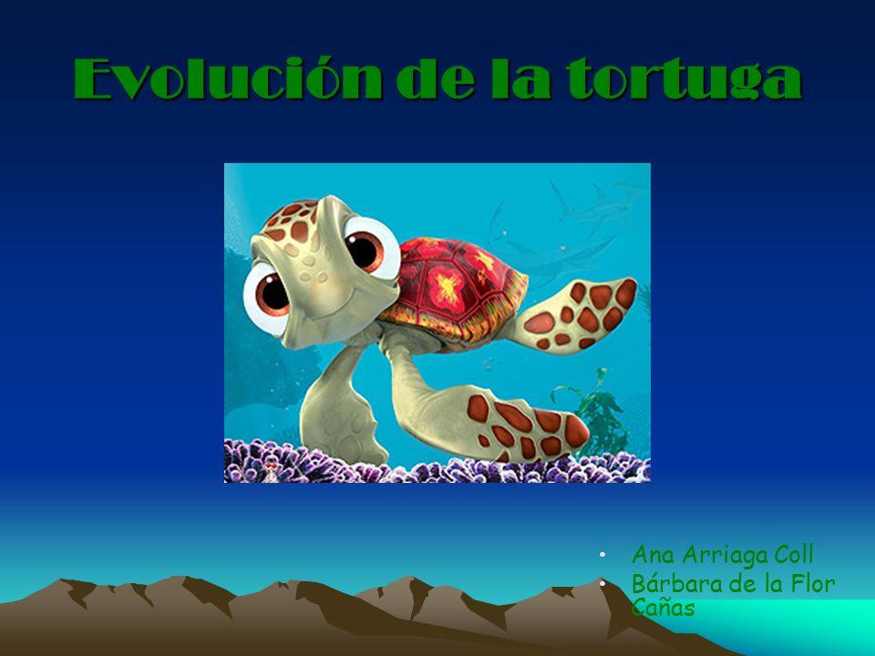 Evolución de la tortuga Ana Arriaga Coll Bárbara de la Flor Cañas
