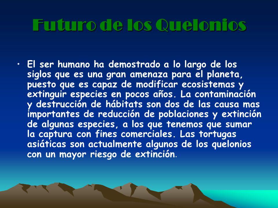 Futuro de los Quelonios El ser humano ha demostrado a lo largo de los siglos que es una gran amenaza para el planeta, puesto que es capaz de modificar