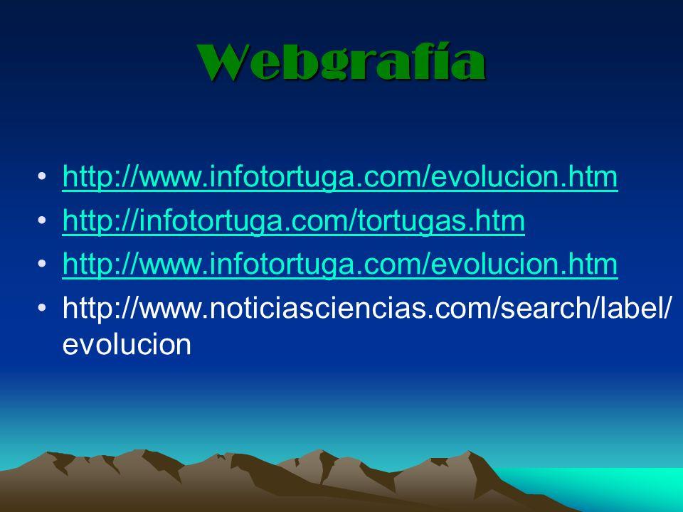 Webgrafía http://www.infotortuga.com/evolucion.htm http://infotortuga.com/tortugas.htm http://www.infotortuga.com/evolucion.htm http://www.noticiascie