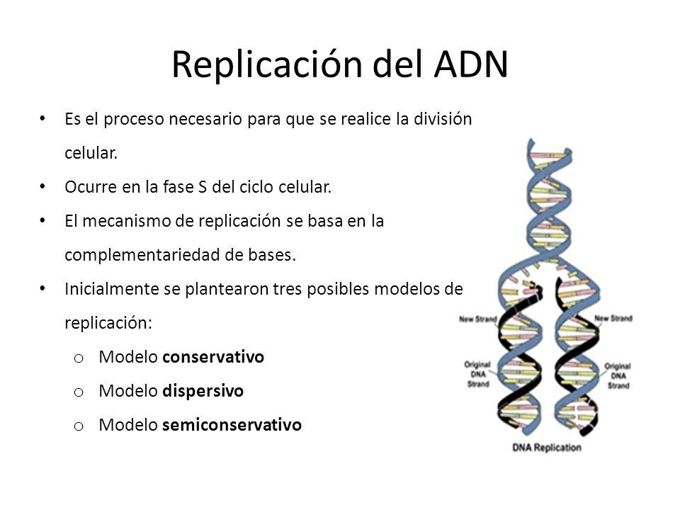 Replicación del ADN Es el proceso necesario para que se realice la división celular. Ocurre en la fase S del ciclo celular. El mecanismo de replicació