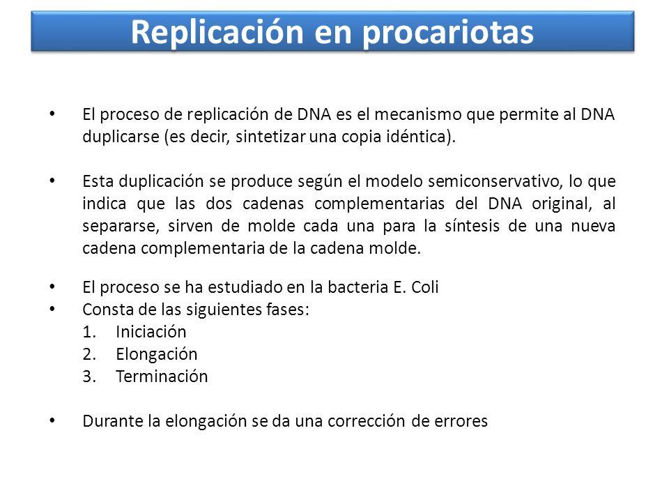 Replicación en procariotas El proceso se ha estudiado en la bacteria E. Coli Consta de las siguientes fases: 1.Iniciación 2.Elongación 3.Terminación D