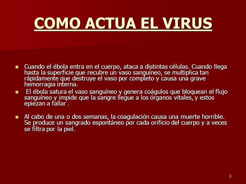 3 COMO ACTUA EL VIRUS Cuando el ébola entra en el cuerpo, ataca a distintas células. Cuando llega hasta la superficie que recubre un vaso sanguíneo, s