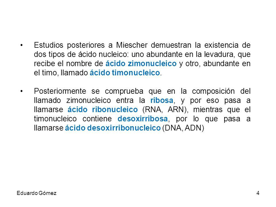 DNA de Escherichia coli Una sola molécula circular cuya circunferencia mide 1 mm Tiene un peso molecular de aproximadamente 10 9 Eduardo Gómez15