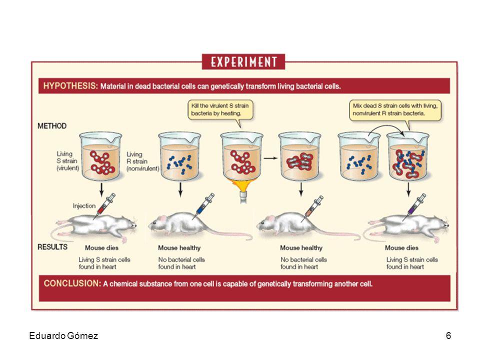 ESTRUCTURA DEL ADN En el ADN se distinguen los tres niveles estructurales: 1.La estructura primaria o secuencia de nucleótidos.