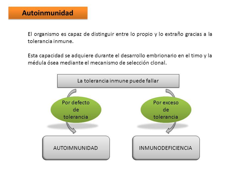 Autoinmunidad El organismo es capaz de distinguir entre lo propio y lo extraño gracias a la tolerancia inmune. Esta capacidad se adquiere durante el d