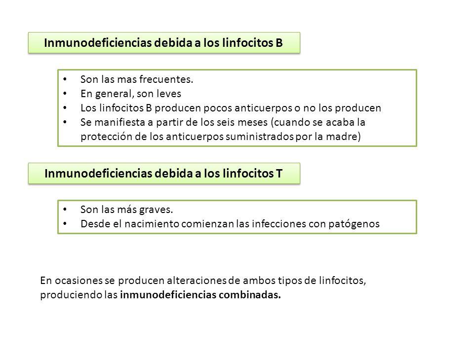 Inmunodeficiencias debida a los linfocitos B Son las mas frecuentes. En general, son leves Los linfocitos B producen pocos anticuerpos o no los produc