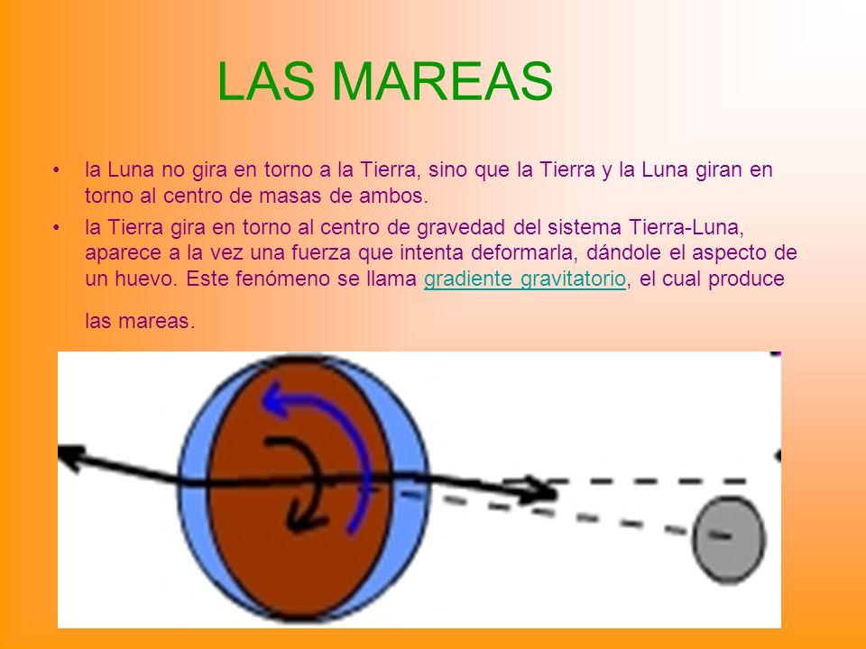 LAS MAREAS la Luna no gira en torno a la Tierra, sino que la Tierra y la Luna giran en torno al centro de masas de ambos. la Tierra gira en torno al c
