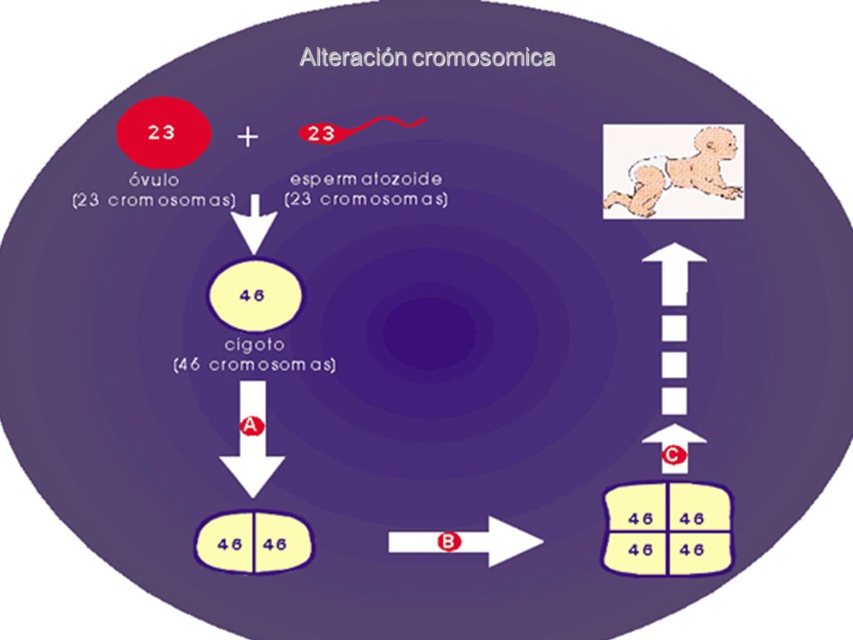 Alteración cromosomica