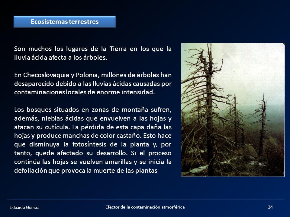 Eduardo Gómez Son muchos los lugares de la Tierra en los que la lluvia ácida afecta a los árboles. En Checoslovaquia y Polonia, millones de árboles ha