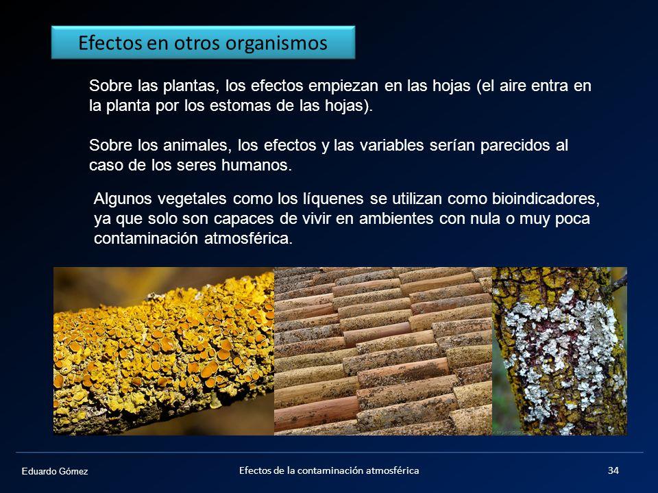 Eduardo Gómez Sobre las plantas, los efectos empiezan en las hojas (el aire entra en la planta por los estomas de las hojas). Sobre los animales, los