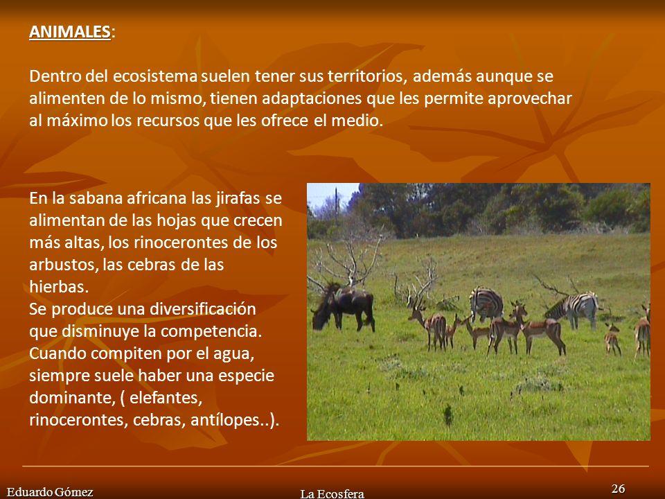 Eduardo Gómez La Ecosfera 26 ANIMALES ANIMALES: Dentro del ecosistema suelen tener sus territorios, además aunque se alimenten de lo mismo, tienen ada