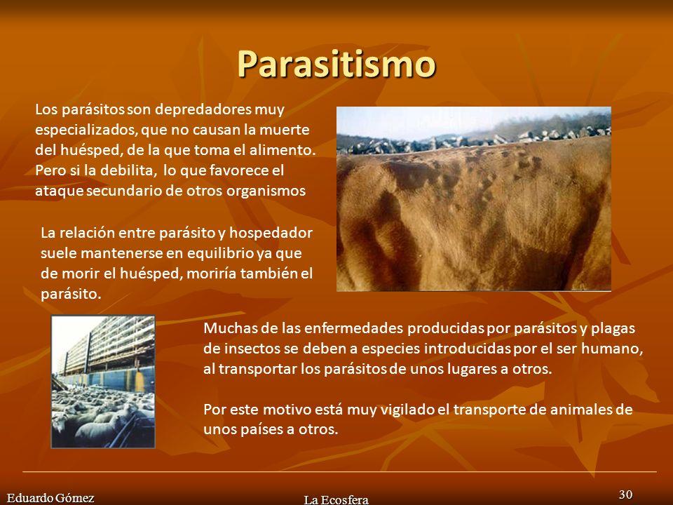 Parasitismo Eduardo Gómez La Ecosfera 30 Los parásitos son depredadores muy especializados, que no causan la muerte del huésped, de la que toma el ali