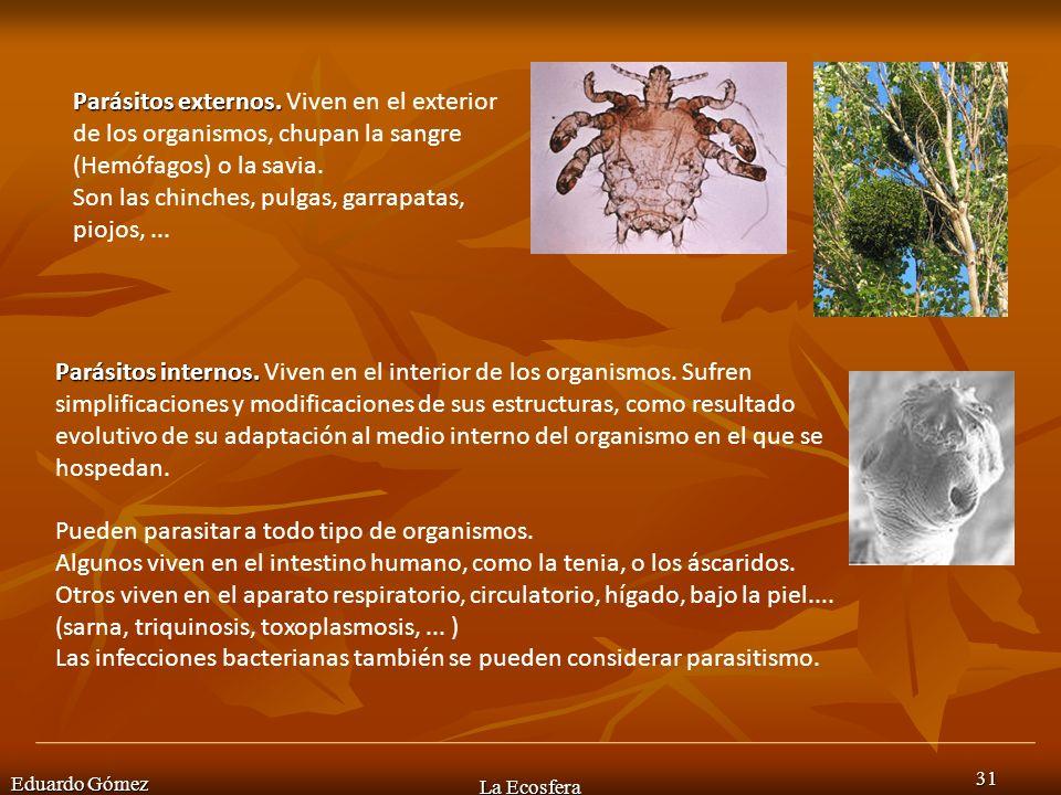 Eduardo Gómez La Ecosfera 31 Parásitos externos. Parásitos externos. Viven en el exterior de los organismos, chupan la sangre (Hemófagos) o la savia.